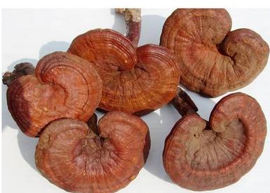 Reishi houba