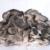 Léčivé houby: Která je pro vás ta pravá?
